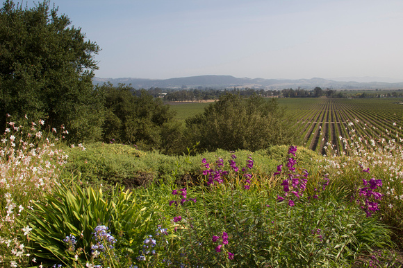 View from Gloria Ferrer Winery